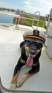Hausbooturlaub mit Hund