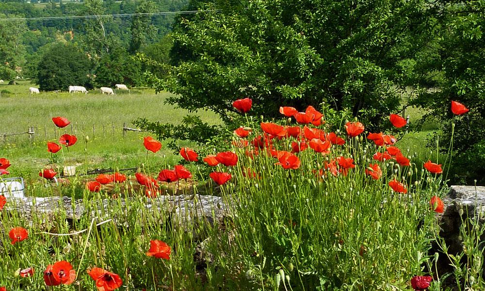 Landschaft am Landhaus Sommerfrische