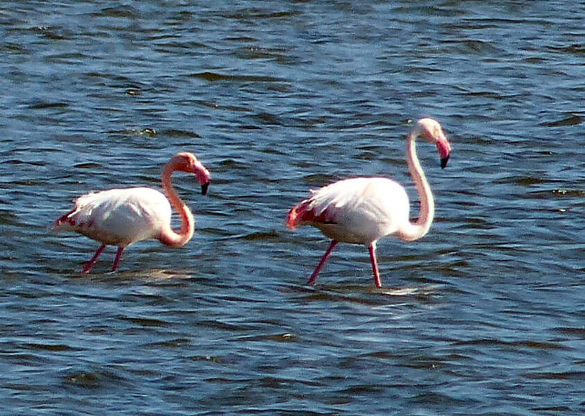 Hausboot Camargue Flamingos