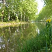Hausboot fahren Canal du Midi Platanenallee